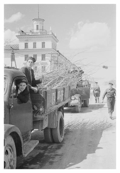 Доставка саженцев на машинах. Май 1955 года