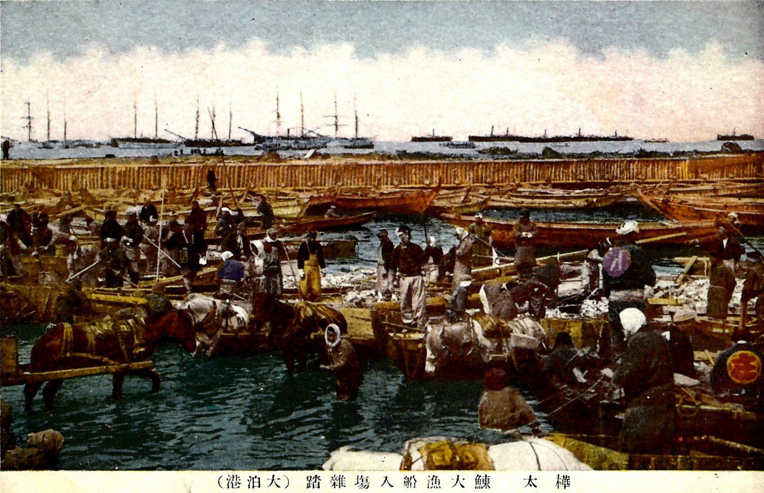 Отомари. Перегрузка сельди в порту Отомари (1930-1935 гг.)