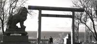 Тории и 'Кома-Ину' у храма Маока дзинзя.