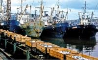 В порту Крабозаводское. Шикотан.