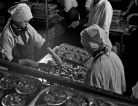 Сотрудники рыбокомбината 'Островной' во время работы.