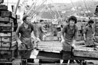 Погрузка сайры на конвейер рыбокомбината 'Островной'