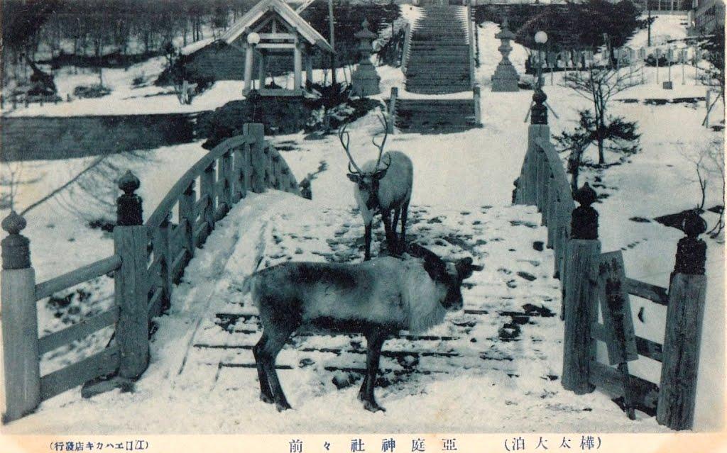 Северные олени на территории храма Анива дзиндзя в Одомари