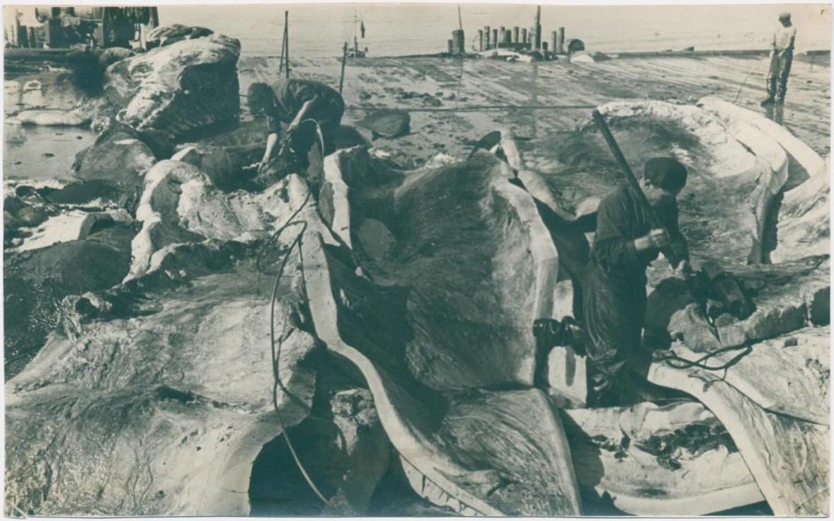 Разделочная площадка китокомбината 'Скалистый' на острове Симушир