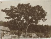 Вид поселка Широкая Падь. Дата примерная